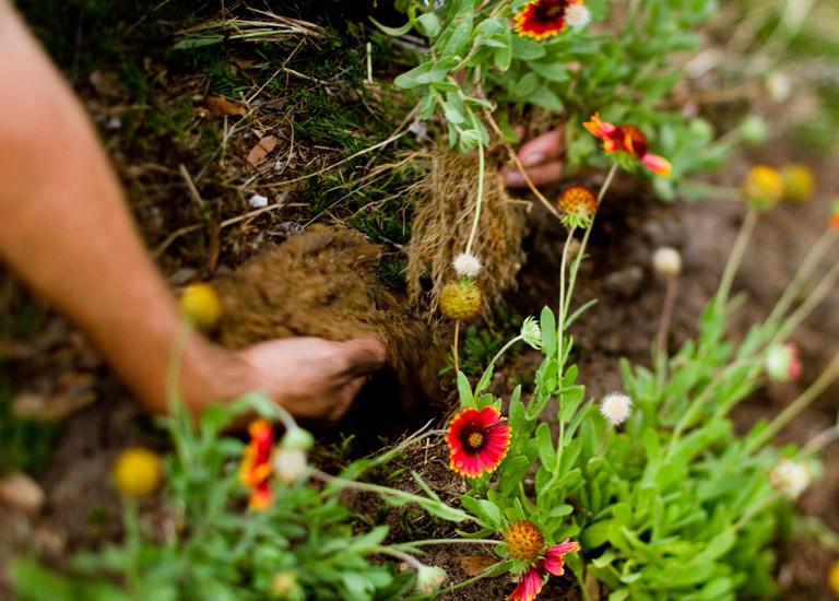 Hand digging in soil