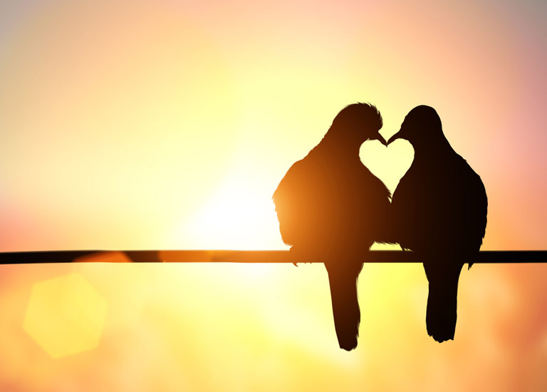 Two birds with heart silhouette